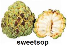 sweetsop